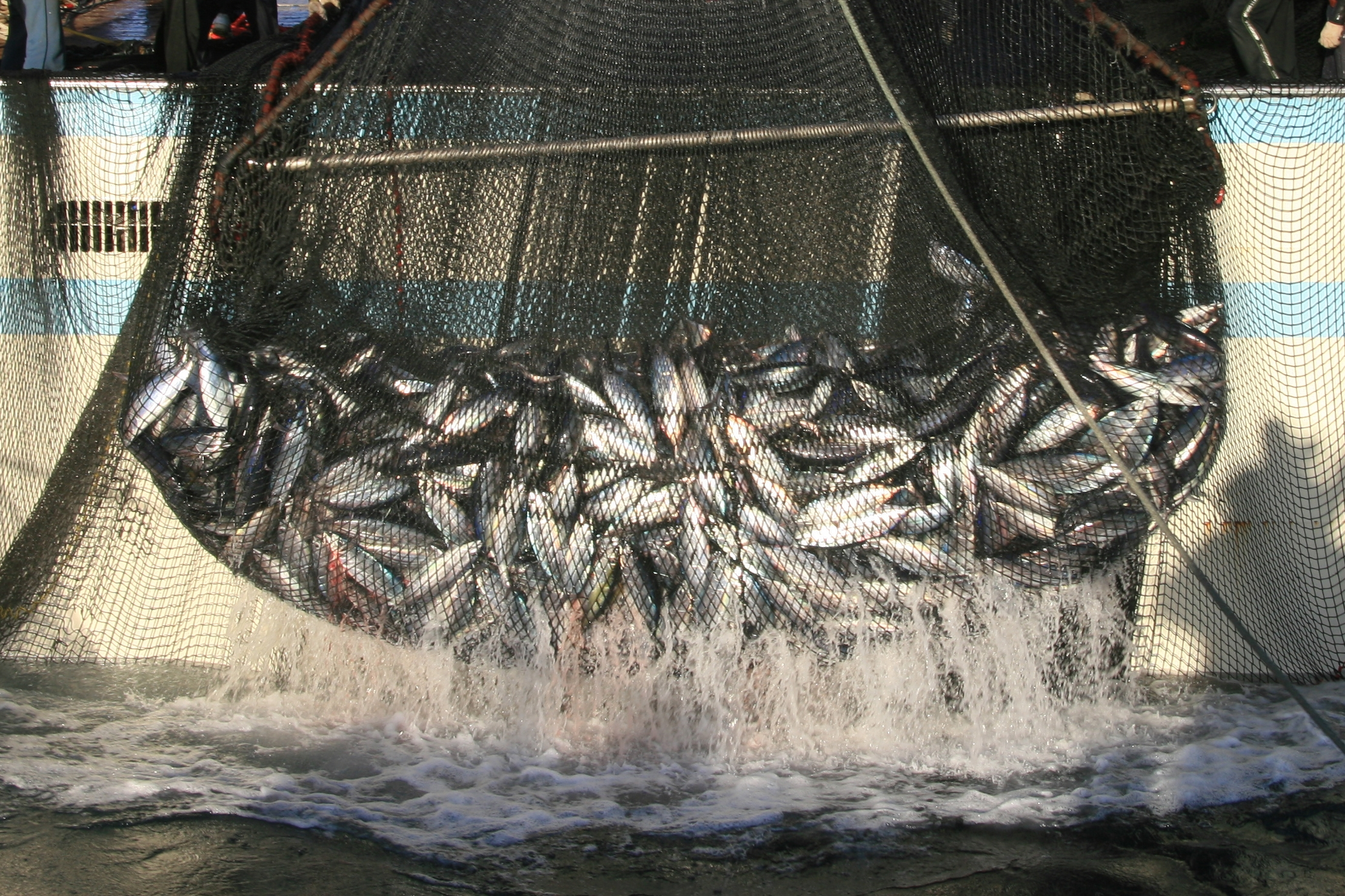 漁の様子取り込み